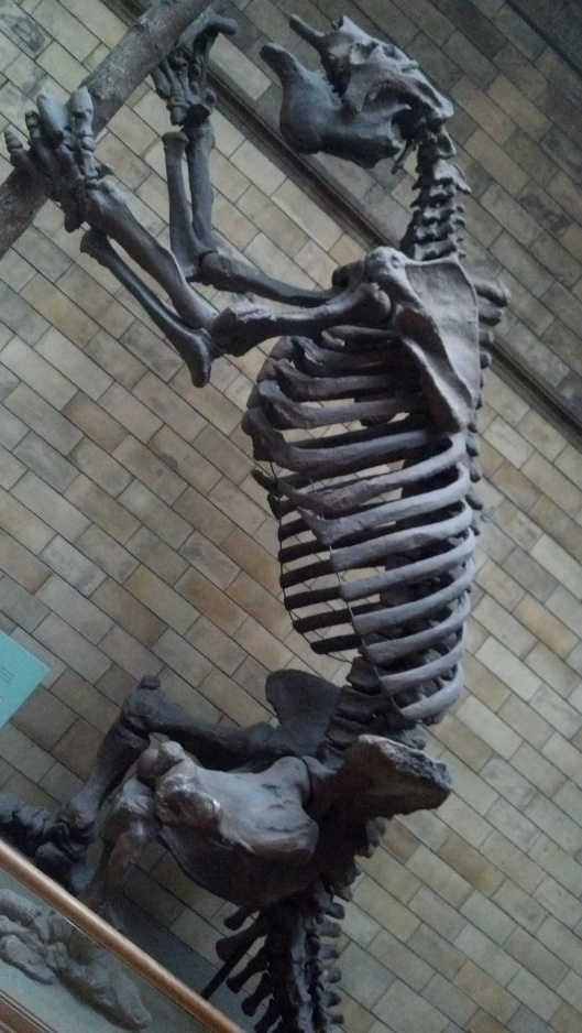 This is from the British Museum of Natural History, not the one in Zagreb, but you get the idea: skeletons!