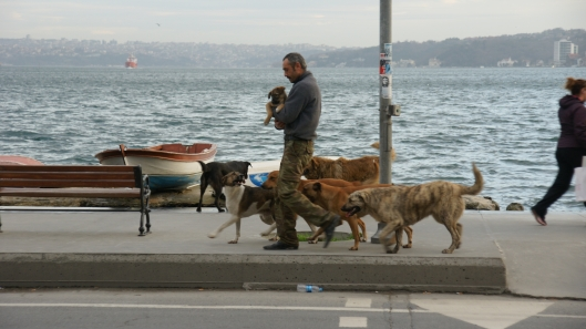 Bosphorus Dog Man