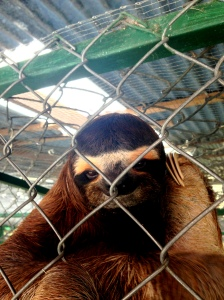 How does this sloth NOT look like it's plotting to kill you?  Just sayin'.