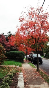 This is just a tree on my street from back in October or early November. Iddinit purty?